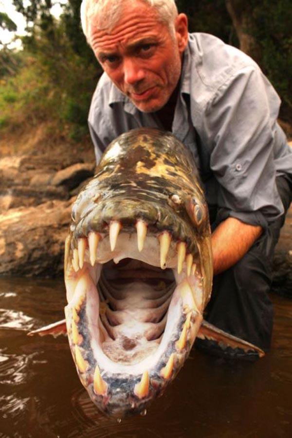 Рыба – голиаф Сережа Имя