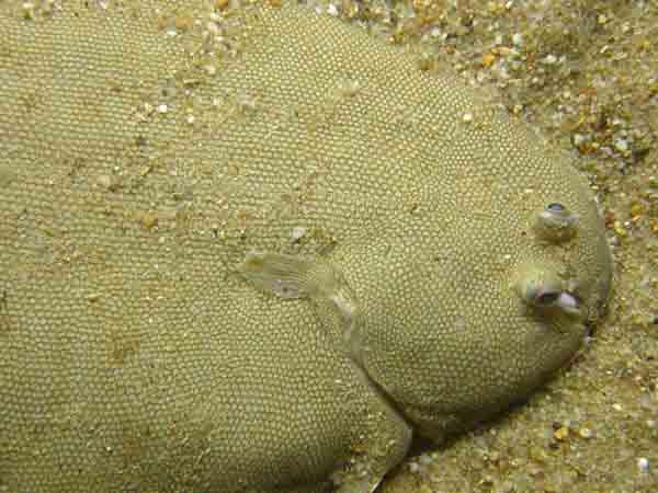 во вьетнаме названия и фото рыба