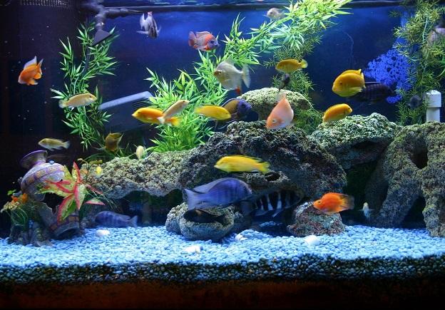 Разновидности аквариумов «под ключ»