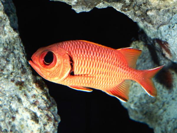 Двойные названия рыб