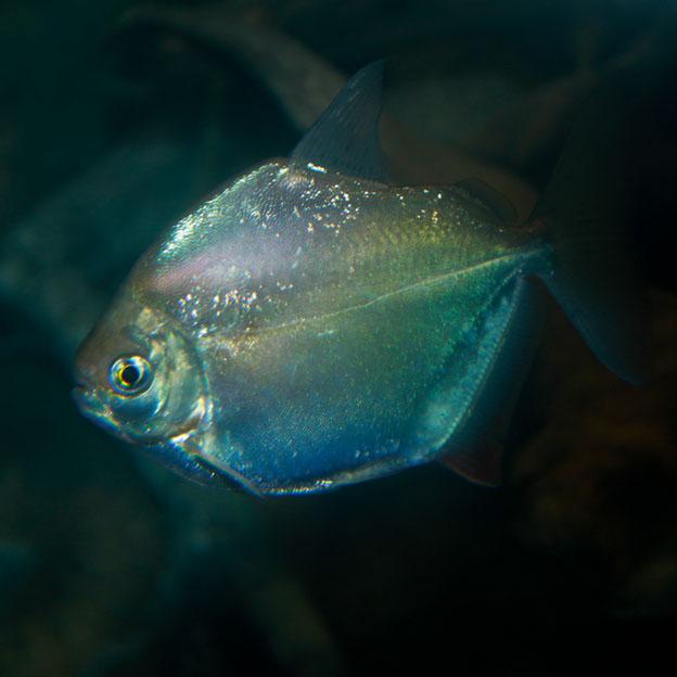 Рыба – доллар