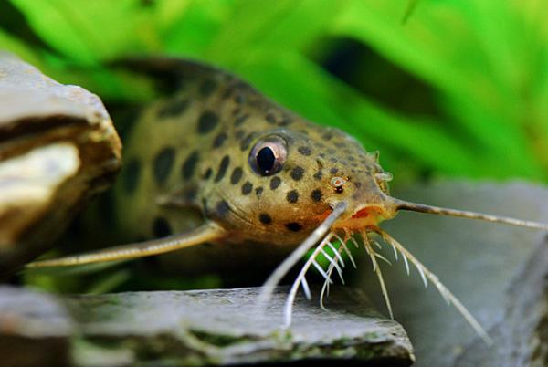 ответы на рыб