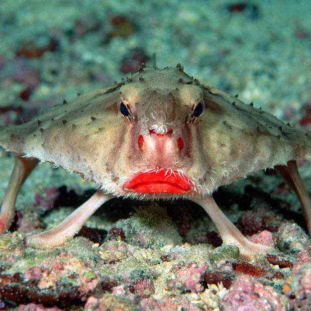 Рыба – мышь